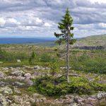 Sme planétou stromov