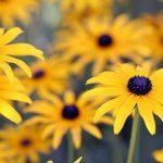 Záhradníkov rok: august