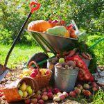 Záhradníkov rok: september
