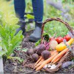 Záhradníkov rok: október