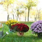 Záhradníkov rok: November