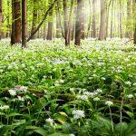 Jarná pochúťka z lesa